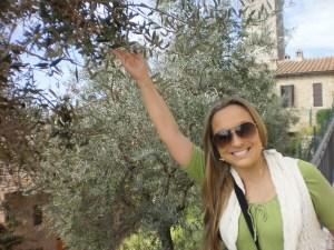 cidade cercada por oliveiras